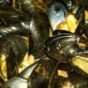 A LocalBozo.com Restaurant Review: Flex Mussels