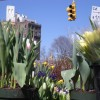Grand Army Plaza Green Market: Bring on the Spring