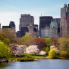 Healthy New York: Spring Allergies