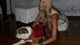 Beth Stern Hosts Benefit for Long Island Bulldog Rescue at Midtown Loft